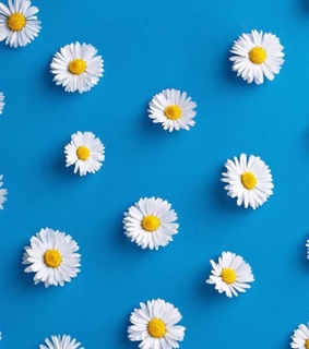 daisies, wallpaper and blue