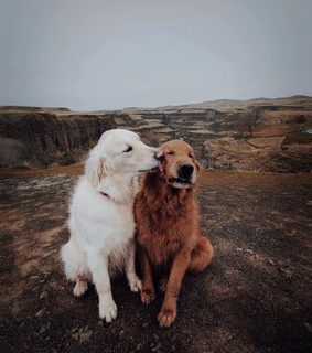 dogs, relationships and cute