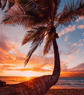 daydreaming, amazing and beach