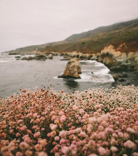 beautiful, flowers and pink