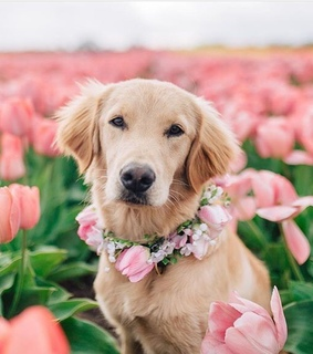 adorable, flower chain and love