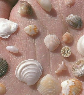 beach, seashells and wanderlust