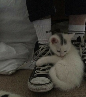 kitten, kitty and shoes