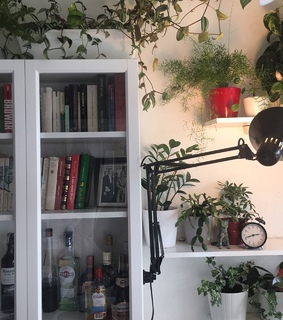plants, room inspiration and white