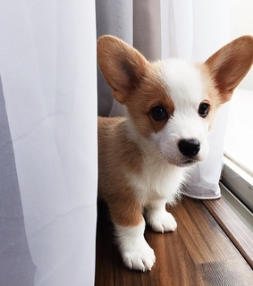 animals, lovely and dog