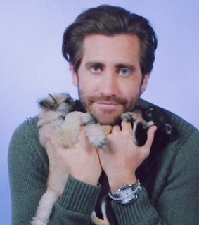 puppies, jake gyllenhaal and dogs