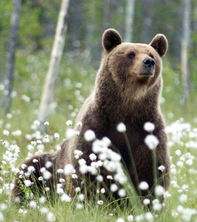 bears, cute animals and nature