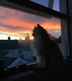 sunset, cloud and cat