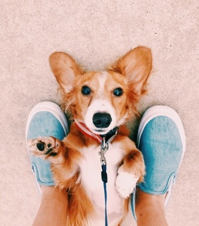 animal, sneakers and pet