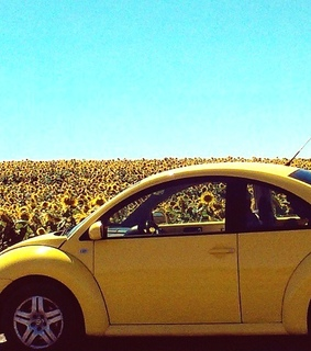 vw, vintage and yellow