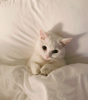 white cat, can't and sleep cat