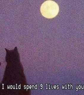 sabrina the teenage witch, black cats and love