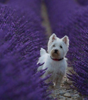 puppy, pets and photography