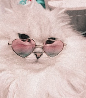 white cat, pink aesthetic and kitten