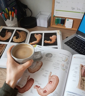 anatomy, study motivation and planning