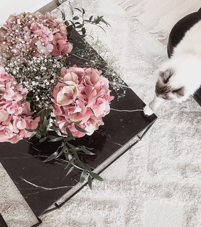 cute, animals and rose