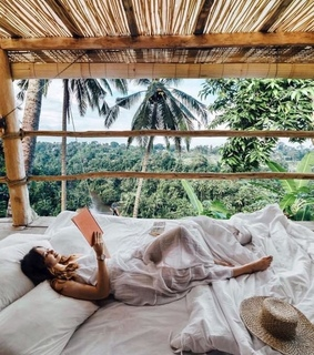 luxury, palm trees and book