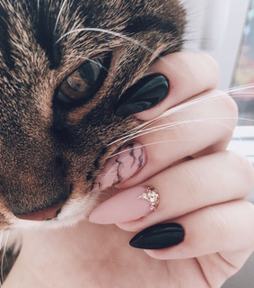 nails, cat and black