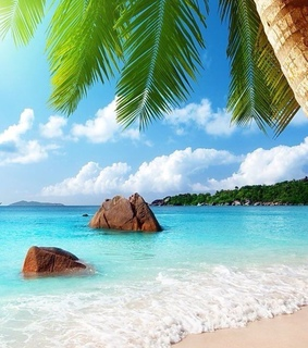 summer, beach and palm trees