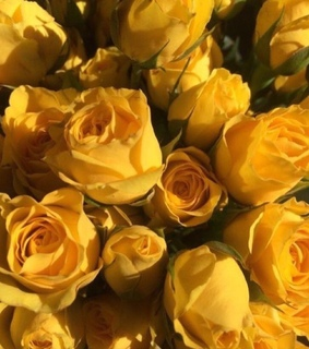 yellow, flower and roses