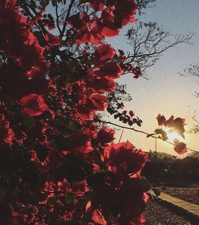 summer, nature and roses