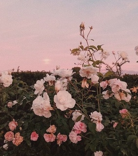 sunset, vsco and pink