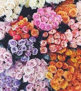 flowers and roses