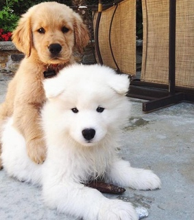 puppies, yes and cute