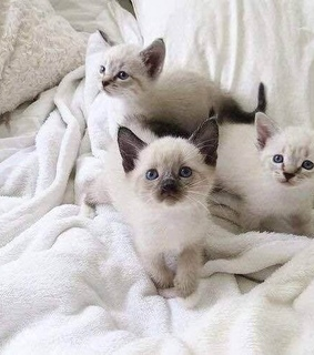 cats, cuteness and kittens