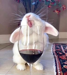 pets, love and wine