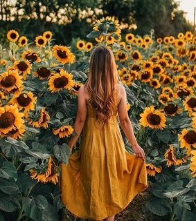 sunflower, nature and photography