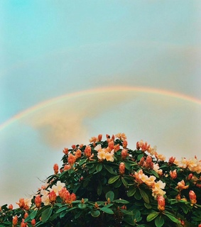 arcoiris, flores and flowers