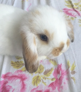 cute animals, soft and bunny