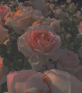 dnlbaums, flowers in narnia and pink roses