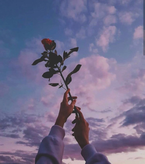 roses, pink sky and sunset