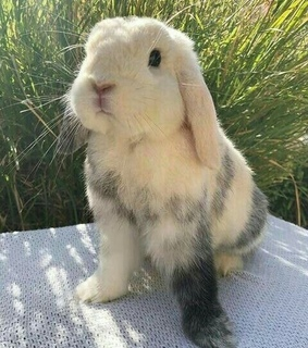 cute, love and bunny