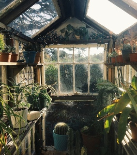 greenhouse, green and natural