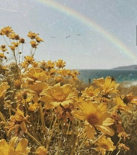 flowers, yellow and rainbow