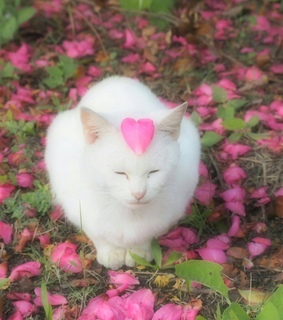 flowers, cat and innocent