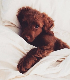 want, cute pets and puppy
