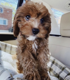 pup, animals and adorable