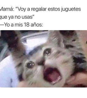 chiste, memes and divertido