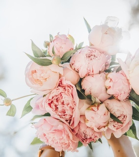 rosas, pink flowers and flower inspiration
