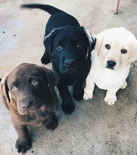 animals, dogs and puppy