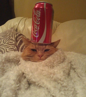 cats, funny and coca cola