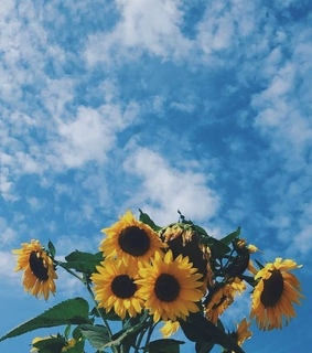 sunflowers, sky and vintage