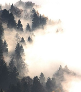 fog, nature and wallpapers