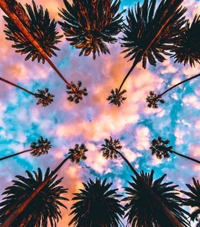summer, purple and palm