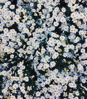 flowers, white and Sunny