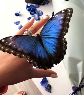 beautiful, photo and butterflies